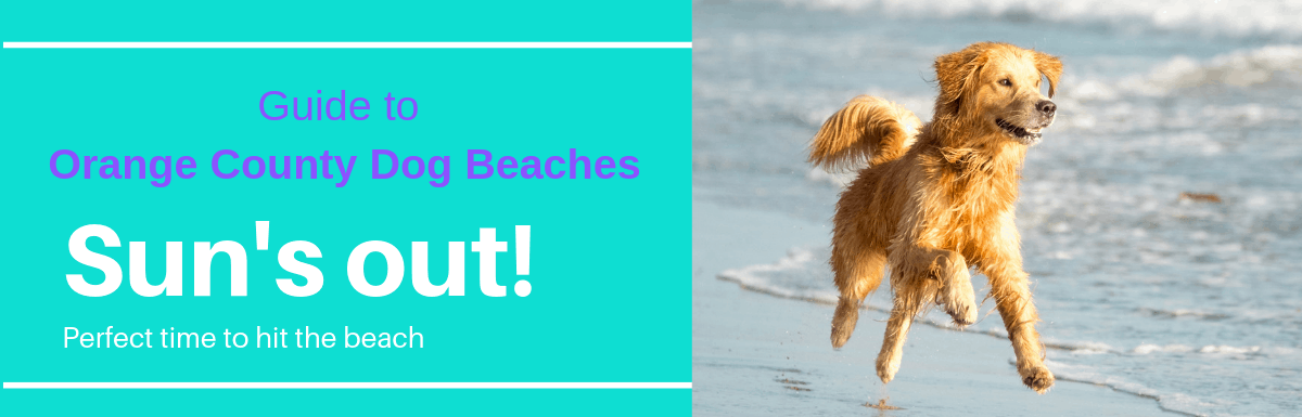 Complete Guide to Dog Beaches in Orange County